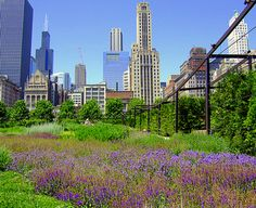 25 Free & cheap things to do & see in Chicago (love being a tourist in my own city)