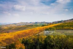 Vineyards near Barolo in autumn, Langhe   Piedmont, Italy   #stockphotos #gettyimages #print #travel