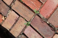 DIY Weed all natural weed killer for brick patio - Modern Garden Bugs, Garden Weeds, Garden Yard Ideas, Lawn And Garden, Killing Weeds, Weed Killer Homemade, Organic Weed Control, Fertilizer For Plants, Brick Patios
