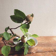 昼下がりの一杯。#tumblerandflowers #flower #branch #ChineseQuince #hydrangea #ikebana #いけばな #wataraikebana