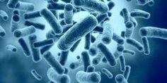 http://woocara.blogspot.com/2015/03/pengertian-bakteri-dan-ciri-ciri-bakteri.html