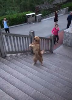 Nice doggo walks up the stairs on two paws Funny Animal Videos, Funny Animal Pictures, Cute Funny Animals, Cute Baby Animals, Funny Dogs, Cute Cats, Cut Animals, Animals And Pets, Animal Antics