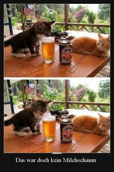 Funny pictures about Kitten's First Beer. Oh, and cool pics about Kitten's First Beer. Also, Kitten's First Beer photos. Funny Animal Pictures, Cute Funny Animals, Funny Cute, Really Funny, Funny Images, Funny Photos, Top Funny, Random Pictures, Cute Kittens