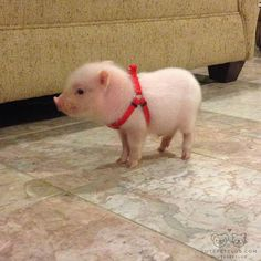 Little pig by baclydi Cute Baby Pigs, Baby Animals Super Cute, Cute Piglets, Cute Little Animals, Cute Funny Animals, Baby Animals Pictures, Cute Animal Photos, Funny Animal Pictures, Hilarious Animals