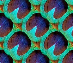 The Eye of the Peacock fabric by peacoquettedesigns on Spoonflower - custom fabric