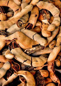 Sueños Rotos by el ñero, via Flickr | Tamarindo or Tamarind fruit