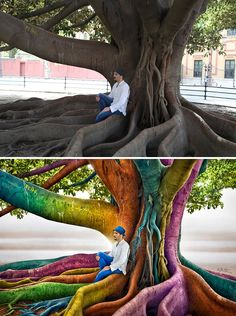 "Ben Heine ""Just Dreaming"" taken in Sevilla, the tree is a Ficus macrophylla, commonly known as the Moreton Bay Fig, a large evergreen banyan tree of the Moraceae family. It is best known for its beautiful buttress roots and can reach heights of 60 m (200 ft). The trunk can reach a diameter of 2.4 m (8 ft)."