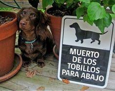 """17 Carteles de """"Cuidado con el perro"""" con gran ingenio - Taringa!"""