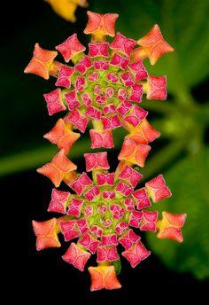 Kıymetli Taşlarla Süslenmiş Bir Halıyı Andıran Çiçekler