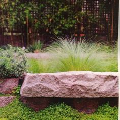 Love the grasses and rock