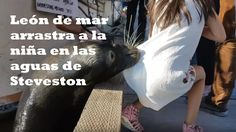 Ultimas Noticias Del Mundo: Vídeo: Un león marino arrastra a una niña al mar e...