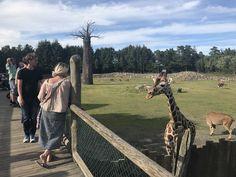 Norway, Giraffe, Animals, Felt Giraffe, Animales, Animaux, Giraffes, Animal, Animais