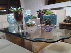 Vasinhos de suculentas