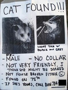 These Lost And Found Pet Posters Are So Funny, You Won't Believe They're Real: These Lost