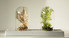 Terrarium forestiers de plantes artificielles, Cabinet de curiosité, dôme cloche verre, Cadeau anniversaire Noel ,décoration salon jardin