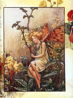 cicely barker_queen of the meadow fairy.jpg (1192×1600)