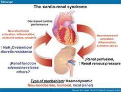 Kidney Interstitium