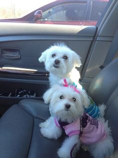 Stylish dogs