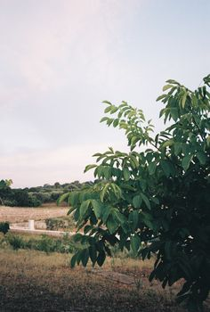 The best feeling is receiving your developed analog shots and seeing the results of what you shot for the first time. Check out my analog diary from italy Minimal Travel, Plant Leaves, Italy, World, Plants, Italia, The World, Plant, Planets