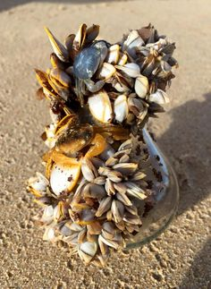 My brother found this life-bulb washed up on an Australian beach. It was all alive and it floated. - Imgur