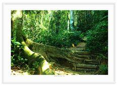 19 - Caminho tropical 1