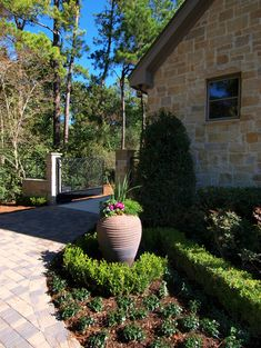 Idea to curl boxwood around nice pot in rounded part of front bed