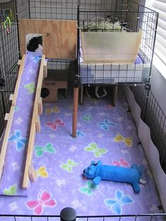 I thought it would be fun to have a picture cage thread. I know we all change things out on a daily basis so please post pictures of your cage today. 2377523776237772377823779 so lets see those cage. Diy Guinea Pig Cage, Guinea Pig House, Pet Guinea Pigs, Pet Pigs, Hamsters, Chinchilla, Diy Bunny Toys, Guinnea Pig, Indoor Rabbit Cage