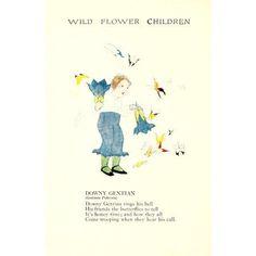 Wild Flower Children c1918 Downy Gentian Canvas Art - Janet Laura Scott (18 x 24)