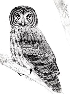 30 Best Free Printable Owl Outline Tattoos images | Owl ...