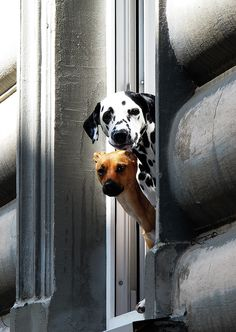Hey You! by Arisa Dina. Look at that smile in that dalmation.