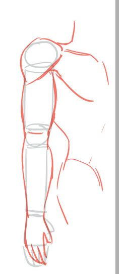 cy anatomy reference