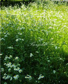 """""""O amor é a única flor que brota e cresce sem a ajuda das estações."""" Khalil Gibran"""