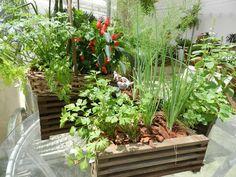 Como fazer uma horta de temperos | Decorando Casas Plantar, Growing Herbs, Horticulture, Nature, Flowers, Bonde, Amanda, Gardening, Apartment Vegetable Garden