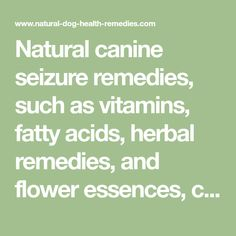 Natural canine seizure remedies, such as vitamins, fatty acids, herbal remedies, and flower essences, can be used to treat dog epilepsy.