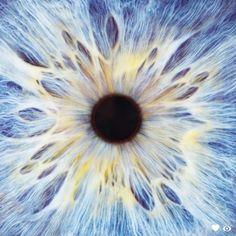 Draw Human Eyes Blue eye, close-up of iris and pupil Close Up Art, Eye Close Up, Extreme Close Up, Texture Photography, Close Up Photography, Pretty Eyes, Beautiful Eyes, Foto Macro, Polychromos