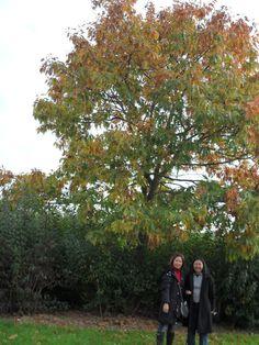 Durante o outono a vegetação dá um colorido maravilhoso.