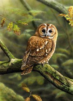 Inmira — «Nigel Artingstall, птицы» на Яндекс.Фотках