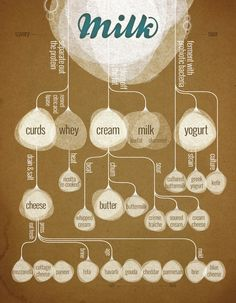Great infographic explaining the different secret lives of Milk by Behance