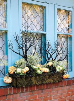 This unusual fall window box has my vote for one of a kind! Love the eerie branches!