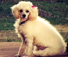 Princesa!.. Mii vida esta perra, la amo!