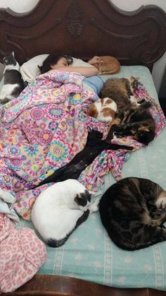 Crazy cat lady bucket list ~ To sleep with a dozen cats one day. Cute Funny Animals, Funny Cats, Cats Humor, Funny Horses, Crazy Cat Lady, Crazy Cats, I Love Cats, Cool Cats, Tier Fotos