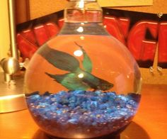 quirky cool! How to Create a Lightbulb Fish Tank - Snapguide