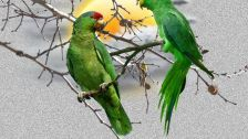 Pair of green parrots abstract creation