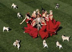Valentino and a few of his pugs