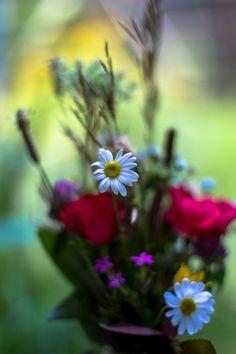all in Bokeh Simple Pleasures, Jewel Tones, Bokeh, Red Roses, Floral Arrangements, Bouquet, Bloom, Secret Gardens, Frame