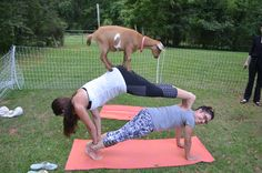 Goat Yoga Goat Yoga, Goat Farming, Goats, Goat