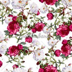 Vintage Roses on White Background