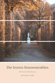 Herbst in Schönbrunn - Wien - Laub - Herbstlaub - Farbenmeer