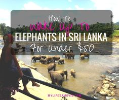 I accidentally learned that you can wake up to elephants in Sri Lanka by booking a hotel on the river in Pinnawala rather than paying for one of the touristy day trips! Here's exactly how to do it!