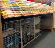 make bed high enough to create dog bed cubbies underneath.